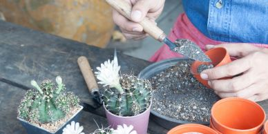 Cacti garden work shop in Norwich