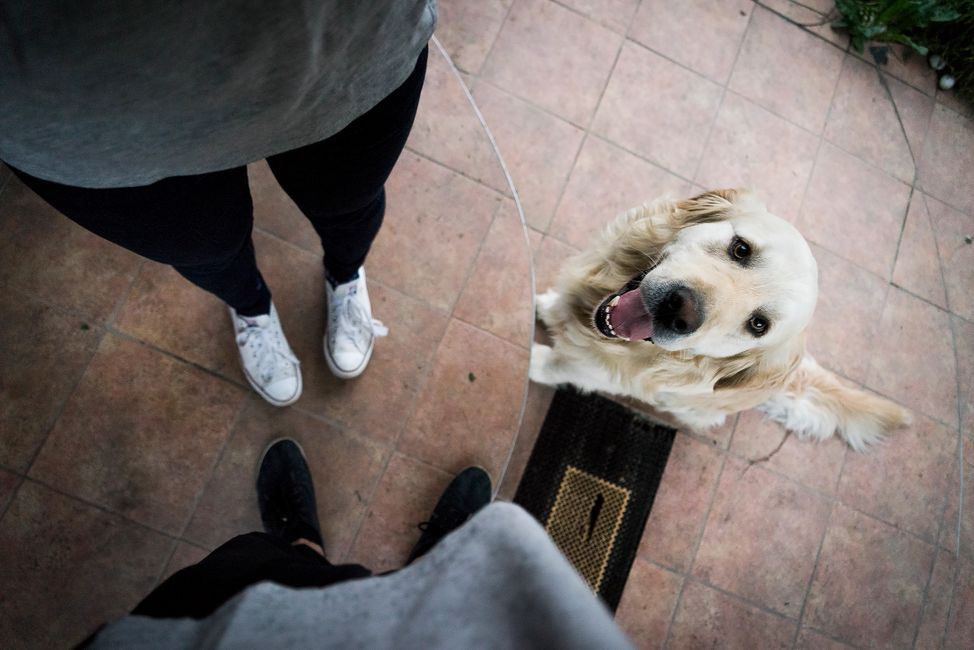 Picture looking down at a dog and two people's legs standing and collaborating.