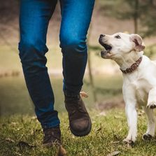 Dog Walking in Cheltenham with Cotswold Dog training. Best Dog Walking available in Cheltenham