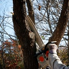 Tree Removal, Tree Service, Tree Maintenance