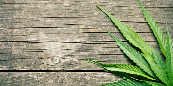 Cannabis leaf on wood background