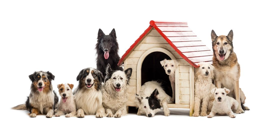 10 different dogs of different breeds and sizes sitting and lying around a kennel