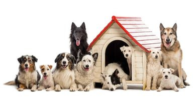 Group of dogs sitting around a dog house