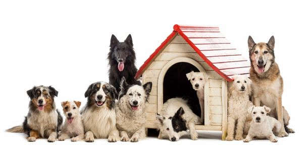 10 dogs of all different sizes are sitting by each other outside a doghouse.