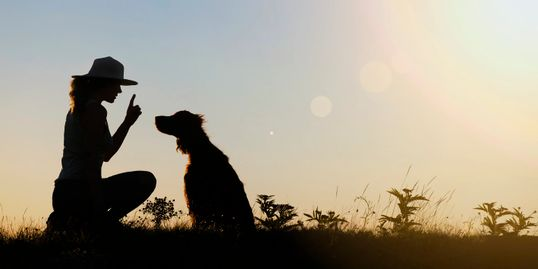 Silhouette of woman talking to a setter in a field