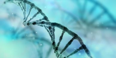 DNA as language of life