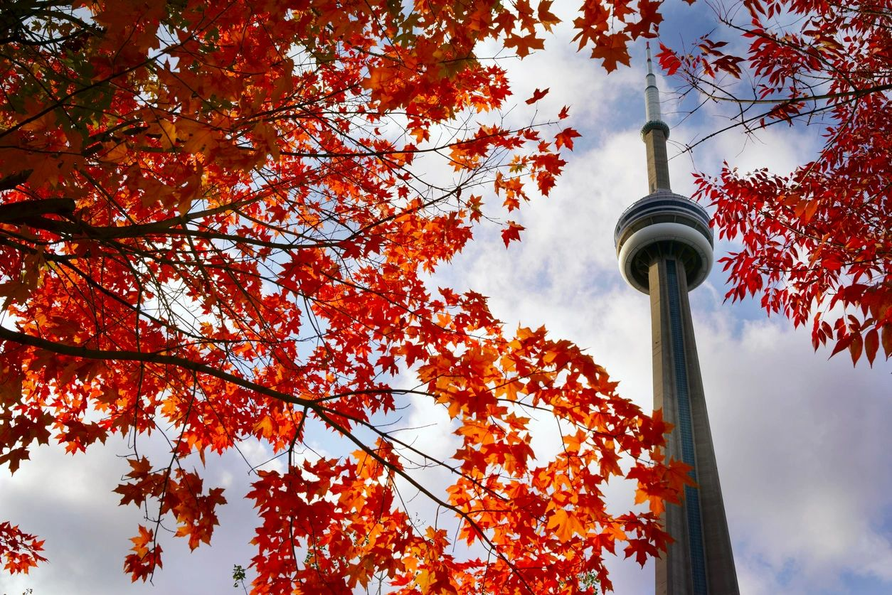 CN tower emerging behind a foliage of red leaves in the fall