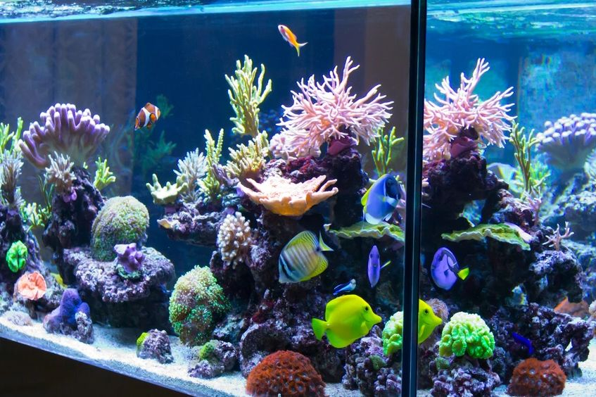 What you should know before buying an aquarium?