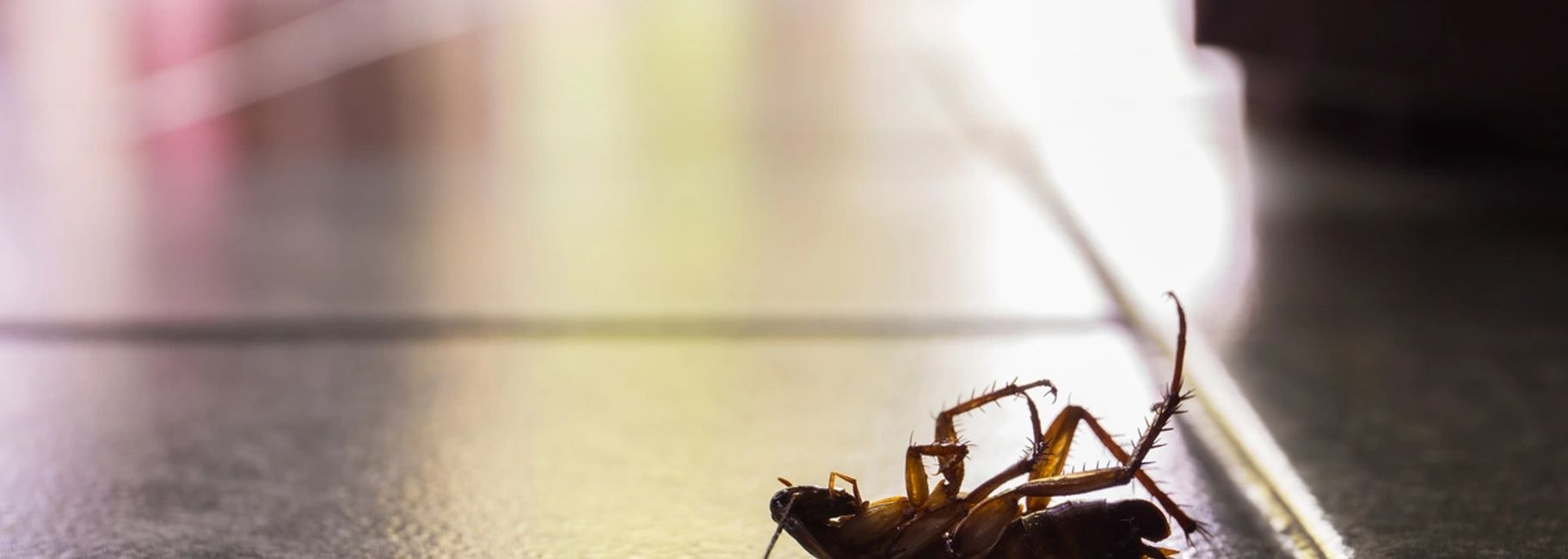 Pest Control, Pest Service, Crawling Insects, Roaches,