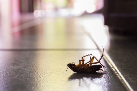 If you see a single cockroach in your house, chances are you have an infestation.