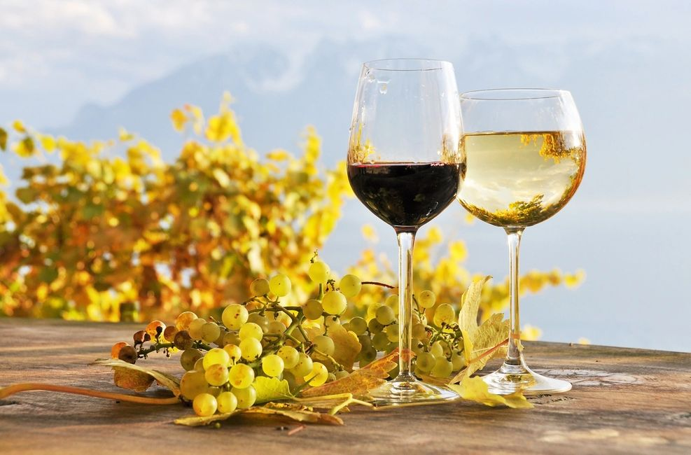 Health benefit of Wine
