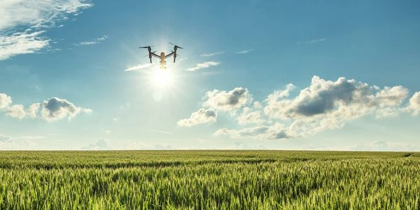 Drone flying over crop field.