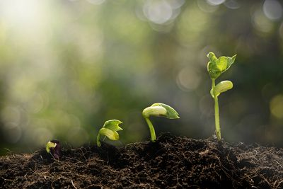 Seedlings breaking through the soil and growing, representing transitions and transformations of life made easier with a Life Coach, like Christine