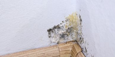 Mold in corner of interior wall