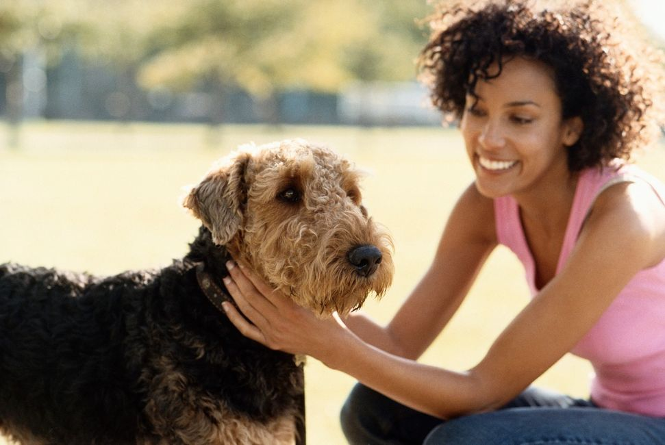 Dog Training Sidcup Dog Training Sidcup Dog Trainer Sidcup Dog Trainer Sidcup