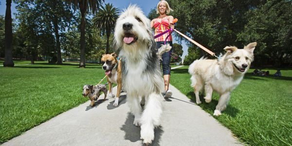 Dog Walking in a park.