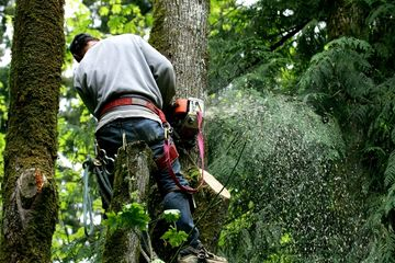 Tree removal  #reliablelandscaper
