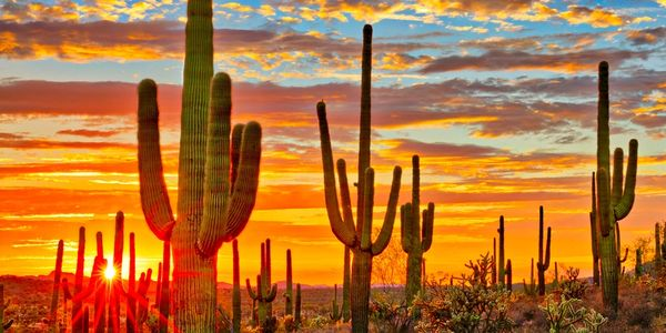 blazing hot sun lighting up a desert filled with saguaro cactus, the image is nature Tucson Arizona