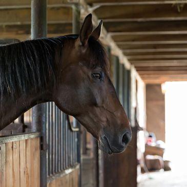 Oak Creek Ranch - Horse Boarding, Stables | Oak Creek Ranch