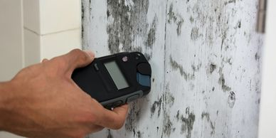 black mold - toxic black mold syndrome - mold allergy - testing for toxic mold syndrome