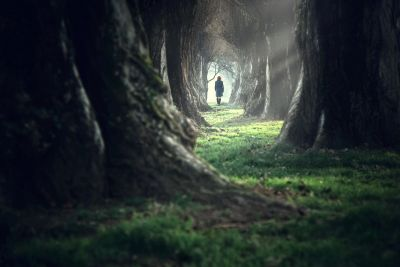 Artistic image of a dark tunnel-like forest with a person in the distance entering a well-lit area.
