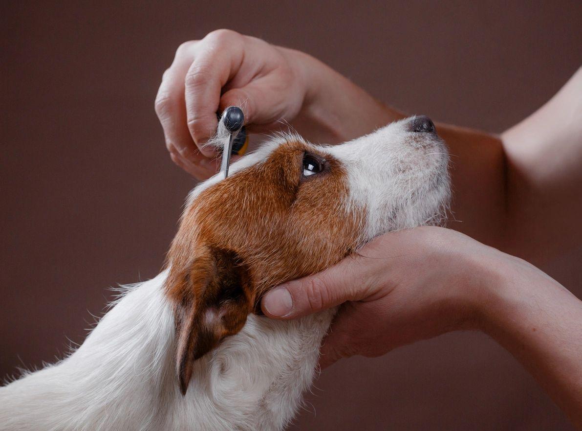 White Rock Pet Grooming