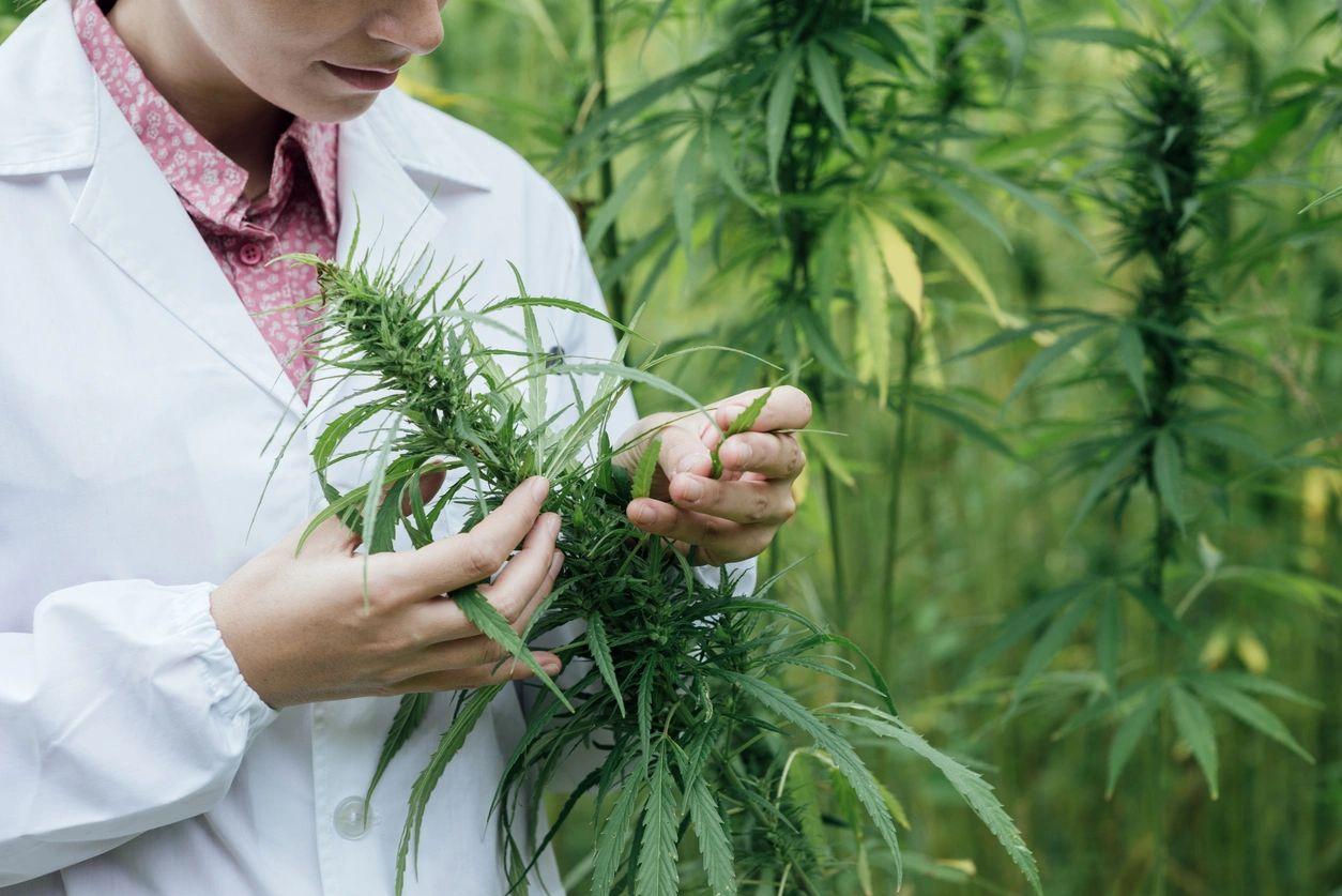 Ли раке при помогает марихуана обои скачать марихуана