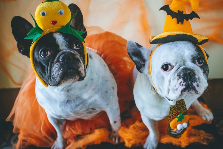 Halloween costumes for the family & pets