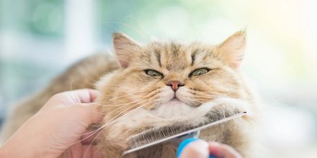 Grooming your cat is good for her coat and skin and... digestive tract! Ask your ZenCat vet why.