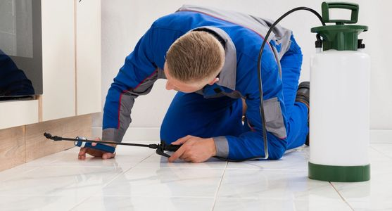 Performing Inspection and treatments specific to the type of pest invading your home or business.