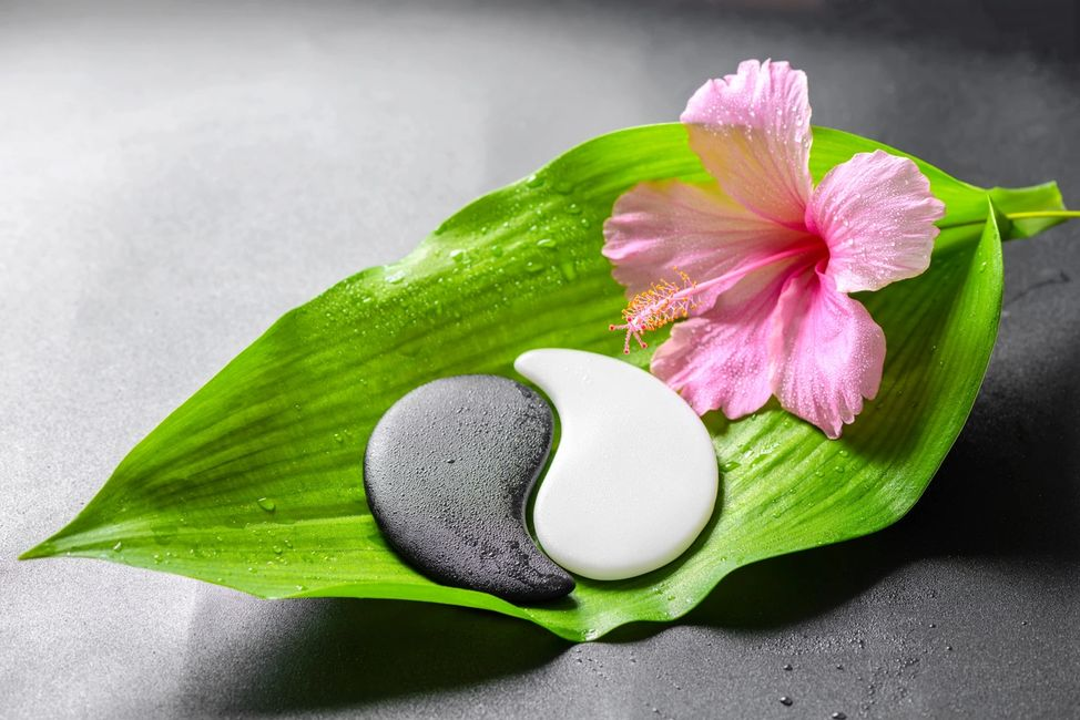 Black and white yin yang on green leaf with a pink blossom