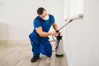 pest control in Ghansoli, pest control Ghansoli, best pest control in Ghansoli
