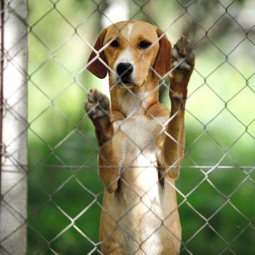 Pet Stress CBD - Dog Anxiety, Pet Stress, Separation Anxiety