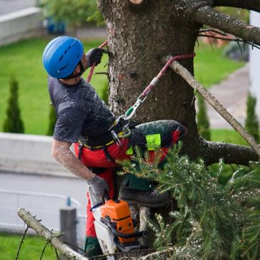 tree service murrieta temecula