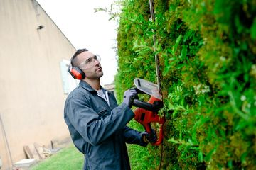 Hedge trimming is a skill and an art. Proper trimming techniques must be used.