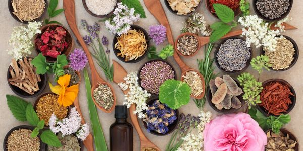 herbs flowers seeds digestive health