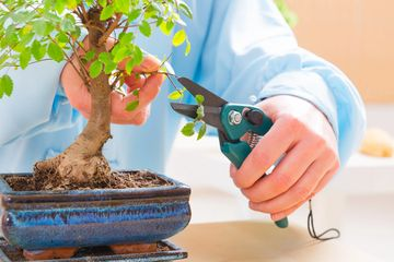 Tree Pruning and trimming #reliablelandscaper