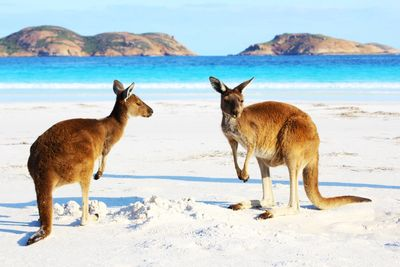 Australia offers cosmopolitan adventures and luxury escapes in every state you visit, with so many a