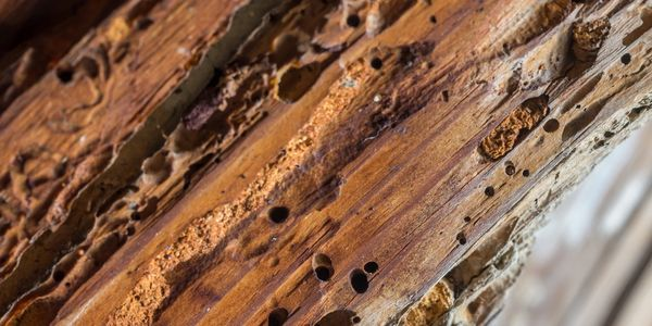 WDO's(Wood Destroying Organisms) such as termites, carpenter ants and beetles could damage your home
