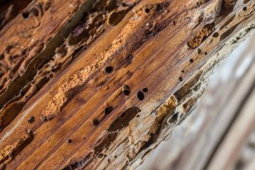 Termite trails in wood